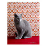 Cat (Russian blue) and wallpaper background Postcard