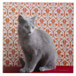 Cat (Russian blue) and wallpaper background Large Square Tile