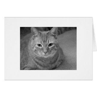 Cat says... card
