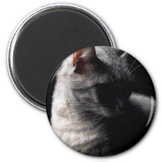 Cat secrecy magnet