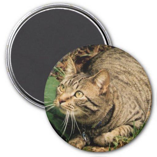 Cat sees a bird magnet