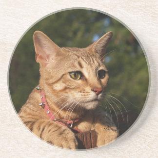 Cat Series---Serval Savannah Cat---Coaster