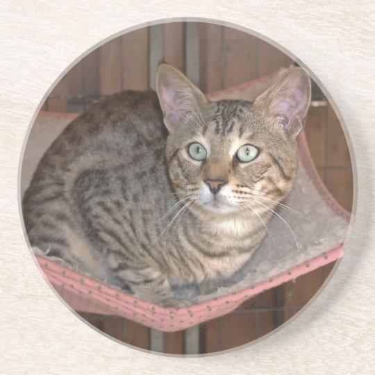 Cat Series---Serval Savannah Cat---Coaster Drink Coaster