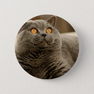 Cat: Shorthair Cat Button