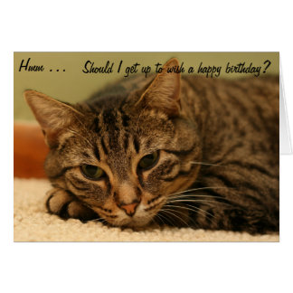 Cat: Should I get up to wish a Happy Birthday? Card