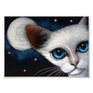 """CAT SIAMÉS 7"""" x 5"""",  del papel de la foto de Fotografías"""