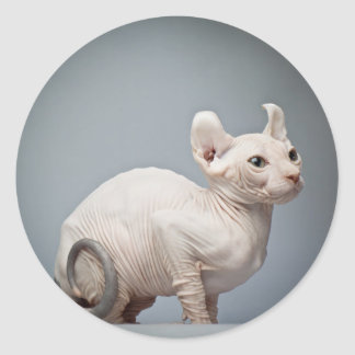 CAT SIN PELO PEGATINA REDONDA