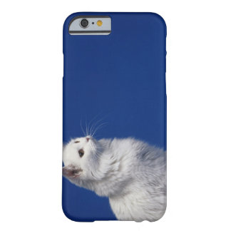 Cat sitting against blue background barely there iPhone 6 case