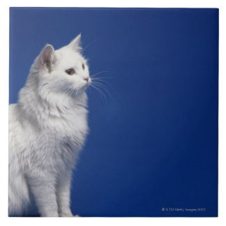 Cat sitting against blue background ceramic tile