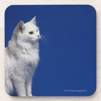 Cat sitting against blue background coaster