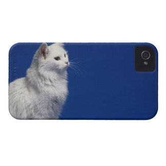 Cat sitting against blue background iPhone 4 cover