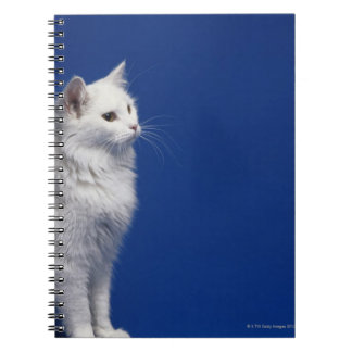 Cat sitting against blue background notebook