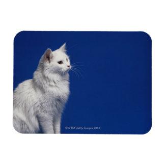 Cat sitting against blue background vinyl magnet