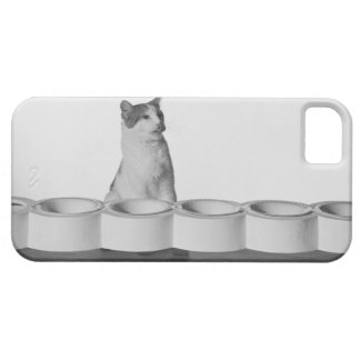 Cat sitting and licking beside pet bowl on white iPhone SE/5/5s case