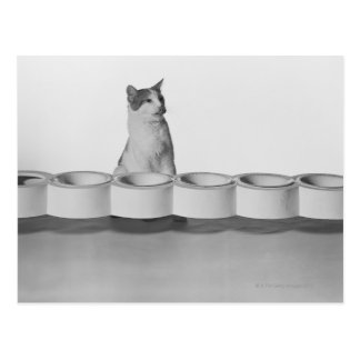 Cat sitting and licking beside pet bowl on white postcard