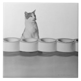 Cat sitting and licking beside pet bowl on white tile