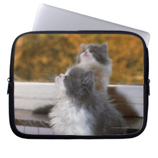 Cat sitting and looking up laptop sleeves