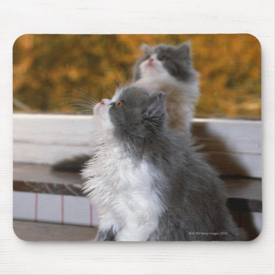 Cat sitting and looking up mouse pad