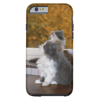 Cat sitting and looking up tough iPhone 6 case