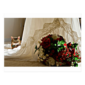 Cat Sitting Behind Wedding Dress Postcards