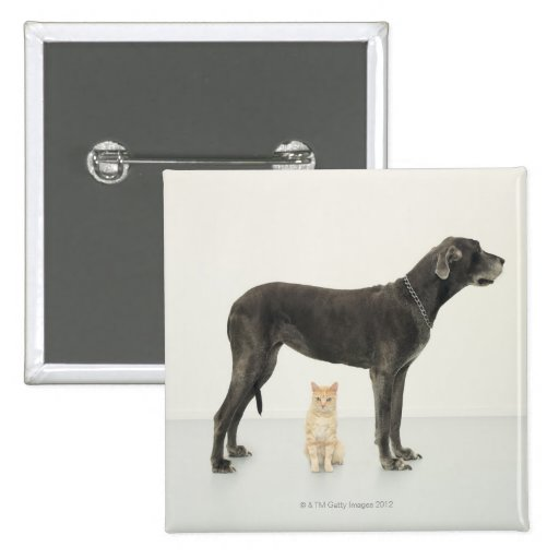 Cat sitting beneath Great Dane Pinback Buttons