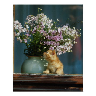 Cat sitting besides flower vase on window sill poster