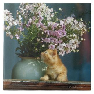 Cat sitting besides flower vase on window sill large square tile