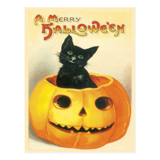 Cat Sitting In A Pumpkin Vintage Postcard