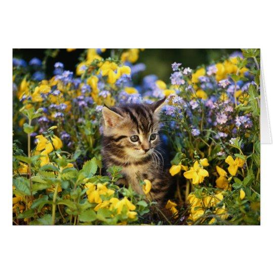 Cat sitting in flower garden card