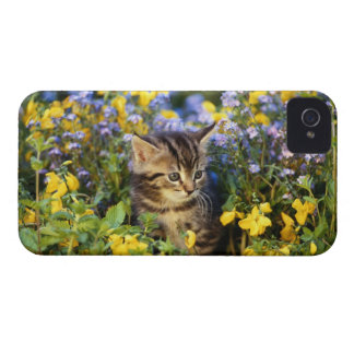 Cat sitting in flower garden iPhone 4 cover