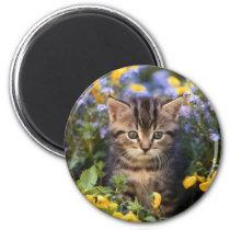 Cat Sitting In Flower Garden Magnet
