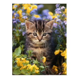 Cat Sitting In Flower Garden Postcard