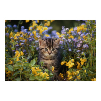 Cat Sitting In Flower Garden Poster