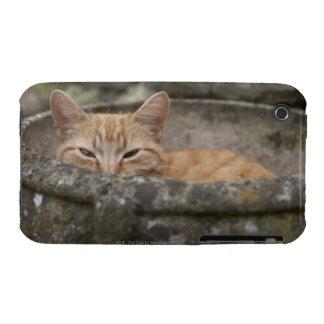 Cat sitting inside urn Case-Mate iPhone 3 case