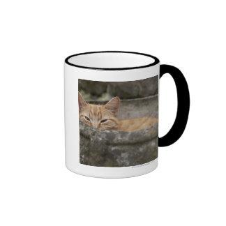 Cat sitting inside urn coffee mugs
