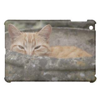 Cat sitting inside urn iPad mini covers
