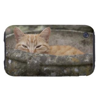 Cat sitting inside urn iPhone 3 tough case
