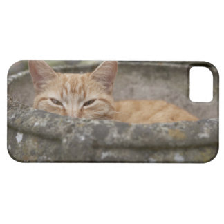 Cat sitting inside urn iPhone SE/5/5s case