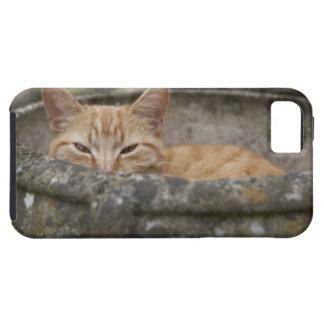 Cat sitting inside urn iPhone SE/5/5s case