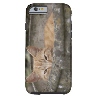 Cat sitting inside urn tough iPhone 6 case
