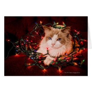 Cat sitting on a ball of Christmas lights. Card