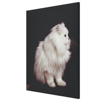 Cat sitting on black background, close-up canvas print