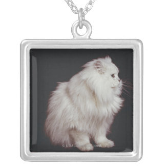 Cat sitting on black background, close-up silver plated necklace