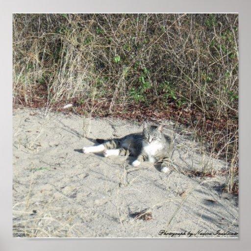Cat sitting on the sand Frame Print