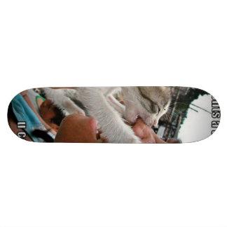 cat skate deck