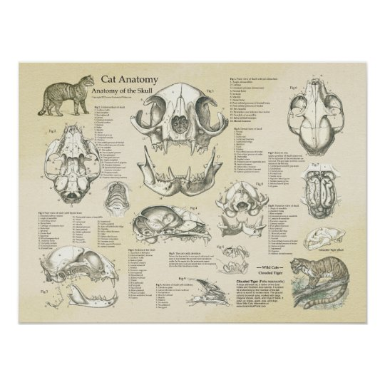 Cat Skeletal Skull Bones Anatomy Chart | Zazzle.com