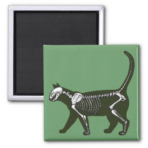 Cat Skeleton 2 Inch Square Magnet