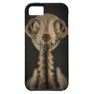 Cat Skeleton iphone 5/5s/SE case
