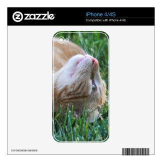Cat iPhone 4S Skins