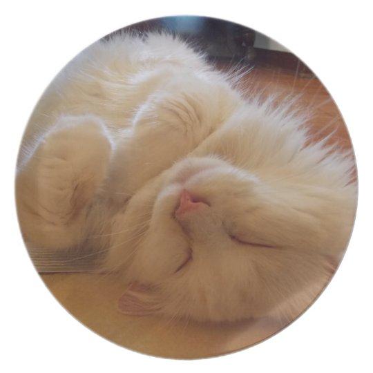 cat sleep plate
